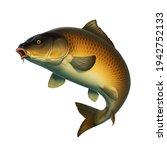 Common Carp fish (koi) realism isolate illustration. Fishing for big carp, feeder fishing, carp fishing.