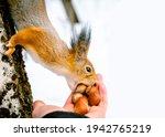 Feeding Animals. Feeding A...