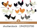 set of domestic chickens flat...   Shutterstock .eps vector #1942923700