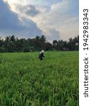 Small photo of I took this photo while walking with my friends in the rice field embankment, it is very nice to be in the village with cool air and beautiful scenery