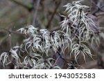 A Close Up Shot Of Seedheads...