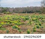 Field Of Vibrant Yellow...