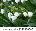 Beautiful White And Green...