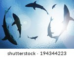 School Of Sharks Circling From...