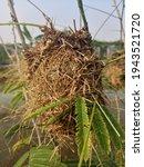 a grass built nest that forms a ...   Shutterstock . vector #1943521720
