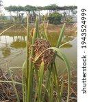 a grass built nest that forms a ...   Shutterstock . vector #1943524999
