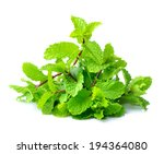 mint isolated on white... | Shutterstock . vector #194364080