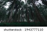 dark mystic forest in autumn.... | Shutterstock . vector #1943777110