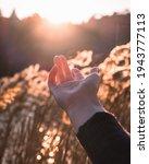 hand reaching to the sun  wheat ... | Shutterstock . vector #1943777113