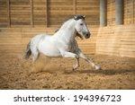 white pre horse runs gallop in... | Shutterstock . vector #194396723