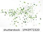 grassy leaf blur vector white... | Shutterstock .eps vector #1943972320