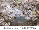 Cherry Blossom Festival In...