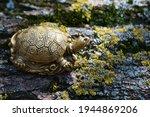 A Turtle Figurine On A Tree...