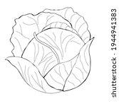 cabbage clipart. vector... | Shutterstock .eps vector #1944941383