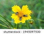 Yellow Wild Flower With Tree...