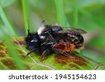 Closeup Of A Copulation Of The...