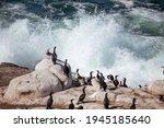 Ocean Birds Resting On The Rock ...
