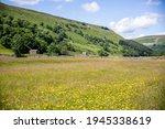 A Meadow Landscape Of Wild...