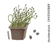 hand drawn onion microgreens.... | Shutterstock .eps vector #1945545889