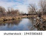 Fallen Tree In Reflective Water ...