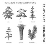 botanical herbs collection hand ... | Shutterstock .eps vector #1945718416