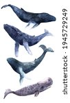 Set With Blue Whales Of...