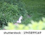 Albino Squirrel Standing Up On...