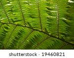 fern leaf | Shutterstock . vector #19460821