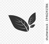 transparent leaf icon png ...