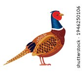 Pheasant Is A Bird In The...