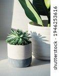 Succulent In Ceramic Pots....