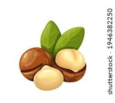 macadamia nuts with leafs....   Shutterstock .eps vector #1946382250