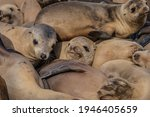 Seals Sleeping In A Pile At The ...