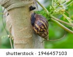 Selective Focus Of Snails On...