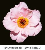 rare type peony on black... | Shutterstock . vector #194645810