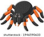 Cartoon Spider Tarantula On...