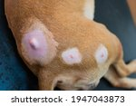 Close Up Photo Of A Dog With...