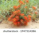 Wildflowers Bloom In Zion...