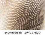 Duck Feathers As A Background....