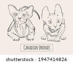 canadian sphinxes cats  sketch... | Shutterstock .eps vector #1947414826