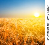 Wheat Field In A Rays Of...