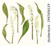 lily of the valley. white... | Shutterstock .eps vector #1947656119