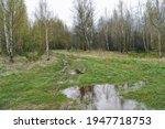 Spring Forest Landscape With...