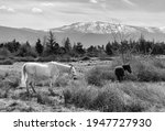 Bucolic Landscape In Black And...