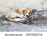Homeless Sleeping Dog In The...