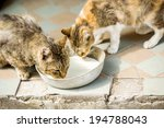 Two Cute Cats Are Drinking Mil...