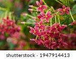 Pink Red Flower Blurred Soft...