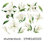 White Lilies Watercolor Clipart ...
