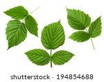 Raspberry Leaf Set Isolated On...