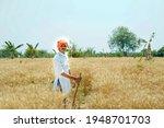 Indian Farmer At Golden Wheat...